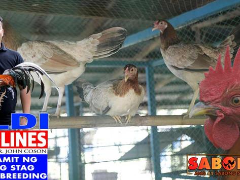 Batang Stag sa Breeding with LDI Headlines (September 26, 2021)
