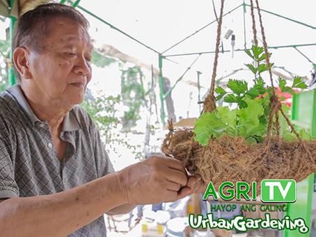 Urban Gardening (April 12, 2020)