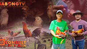 Pag-Alaga sa Day-Old Chicks ang eConsult with Vet Ni Juan (October 17, 2021)