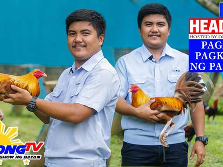 Pag-Alaga sa Manok Sabong Pagkatapos ng Paglugon (November 22, 2020)