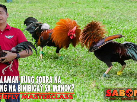 Over-Training ng Manok Sabong with Atty. Ryan Abrenica (May 2, 2021)