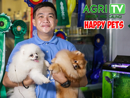 Happy Pets (April 12, 2020)
