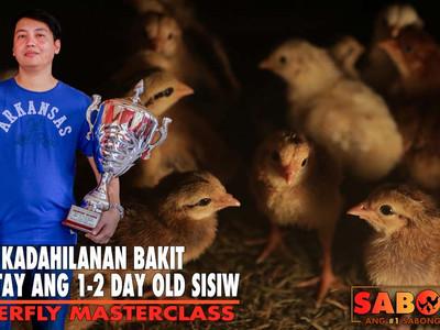 Usapang Mortality ng 1-2 Day-Old Sisiw with Atty. Ryan (April 18, 2021)