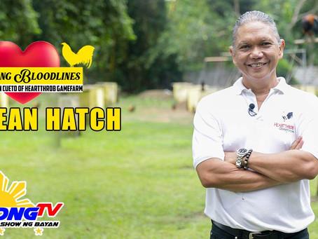 Mclean Hatch sa Sabong with Usapang Bloodlines (November 8, 2020)