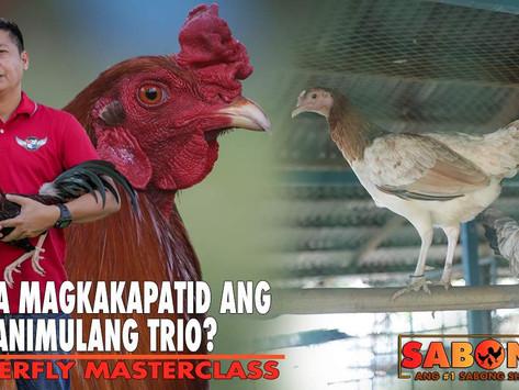 Tanong na Magkapatid na Panimulang Trio with Atty. Ryan (October 10, 2021)