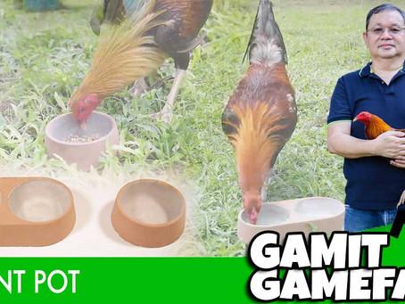 Gamit Gamefarm ang Cement Pot (July 25, 2021)