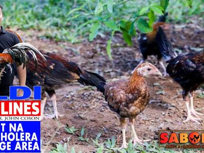 Fowl Cholera sa Gamefarm Range Area with Doc John (April 11, 2021)