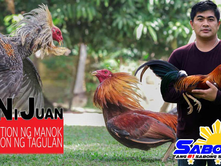 Alaga sa Manok Sabong sa Malamig na Panahon with Doc Nilo (November 15, 2020)