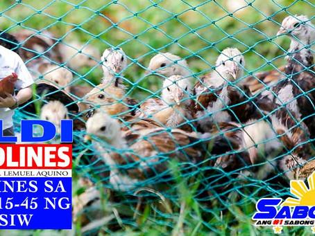 Part 2 ng Pagbakuna sa Sisiw sa Sabong sa LDI Headlines (November 8, 2020)