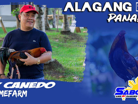 Sabong Champ Rey Canedo sa Alagang LDI Panalo To (February 28, 2021)