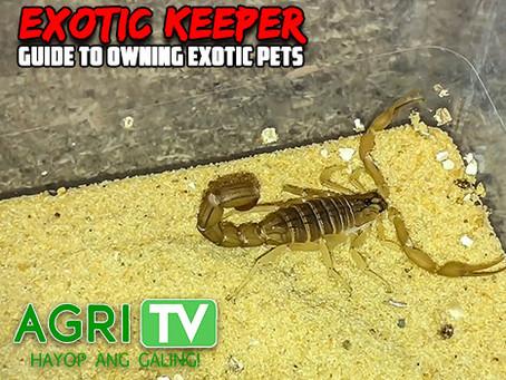 Exotic Keeper (April 26, 2020)