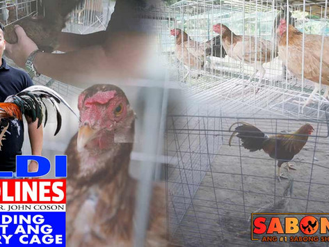 Ulat sa Gamit ng Battery Cage sa Breeding with Doc John (September 5, 2021)