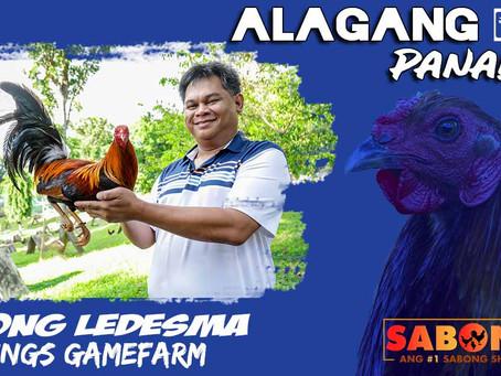 Sabong Champ Patong Ledesma sa Alagang LDI Panalo To (March 7, 2021)