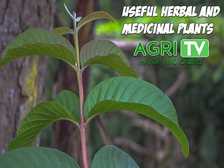 Agri-Alert (April 19, 2020)