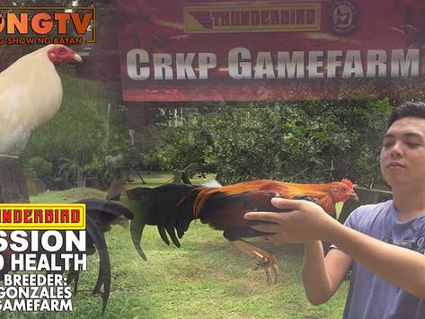 Keith Gonzales ng CRKP Gamefarm with Thunderbird at Doc Jayfee (October 10, 2021)