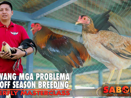 Off-Season Breeding Issues from RA Superfly Masterclass (May 16, 2021)