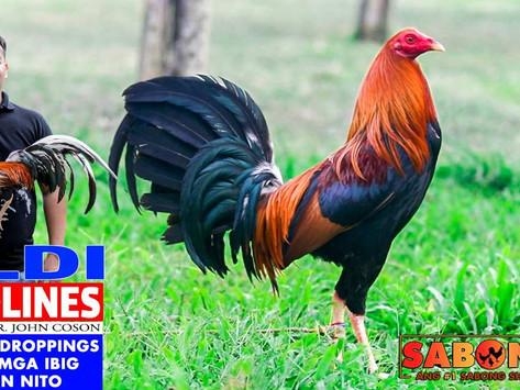 LDI Headlines ang Kulay ng Droppings at Kahulugan Nito (October 10, 2021)