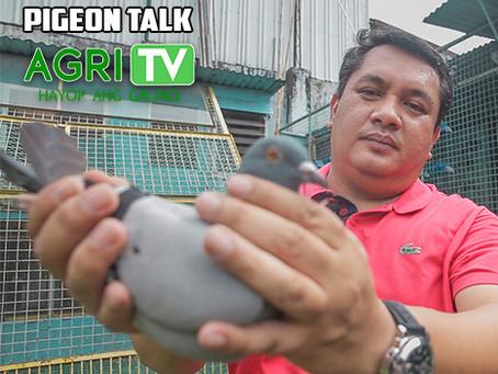 Pigeon Talk (May 3, 2020)