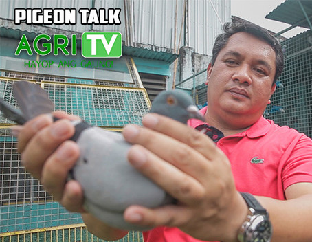 Pigeon Talk (May 3, 2020)