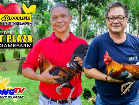 Usapang Bloodlines with Sabong Legend Boyet Plaza (November 22, 2020)