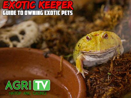 Exotic Keeper (May 3, 2020)