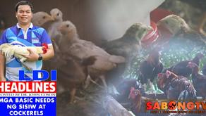 LDI Headlines on Mga Basic Needs ng Sisiw at Cockerels (October 31, 2021)
