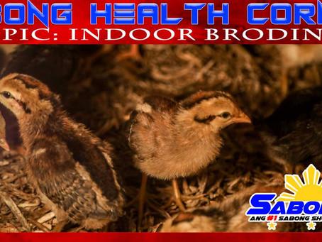Indoor Brooding sa Sabong Health Corner (November 22, 2020)