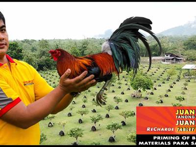 Priming ng Sabong Breeding Materials sa Vet Ni Juan (April 11, 2021)