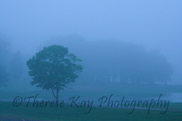 Thereses Mist photo.jpg