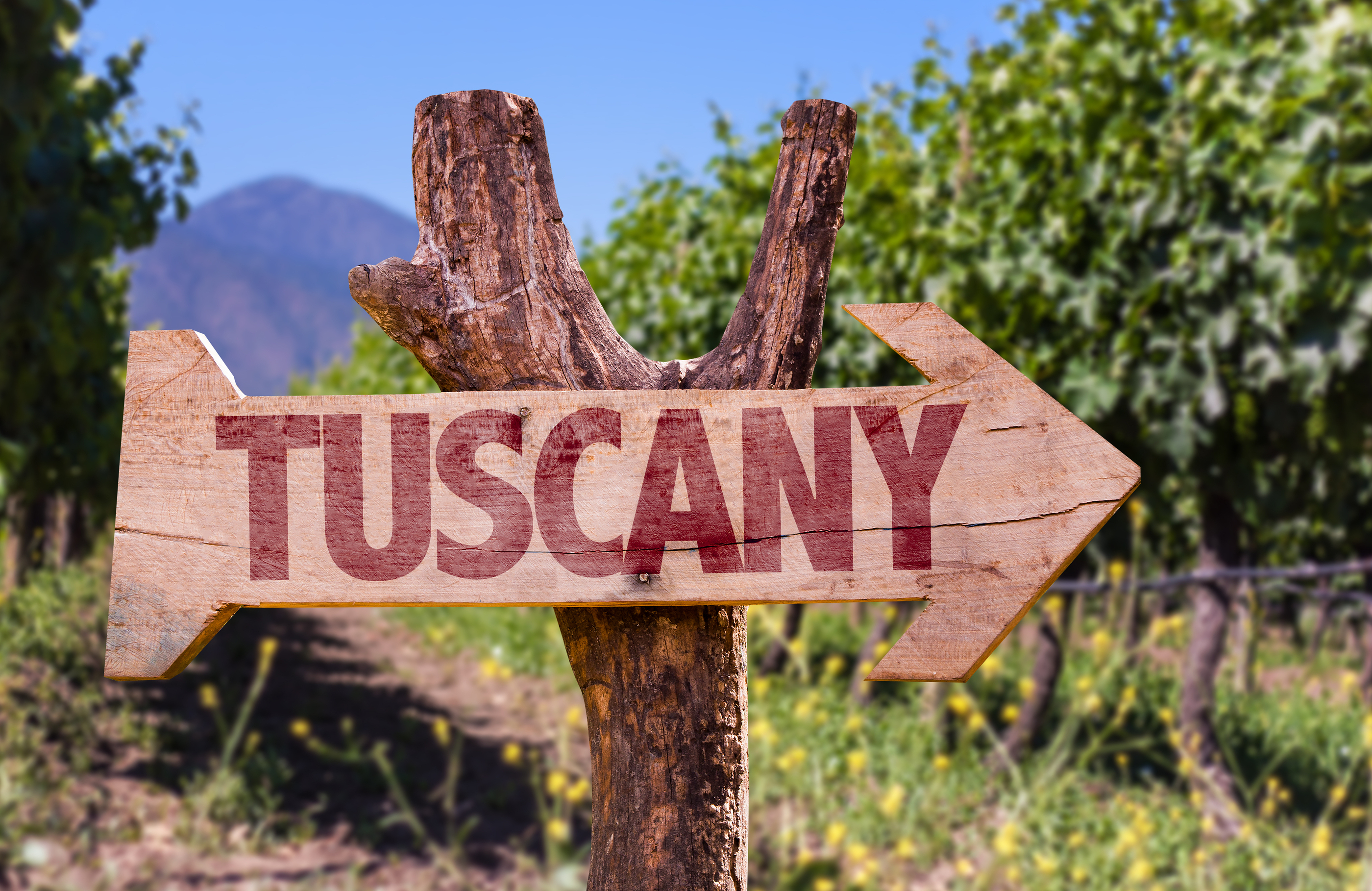 Tuscany wooden sign with winery background