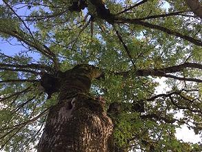 nature 3.JPG
