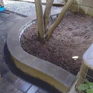 retainning wall tree.jpg