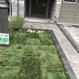 new grass.HEIC