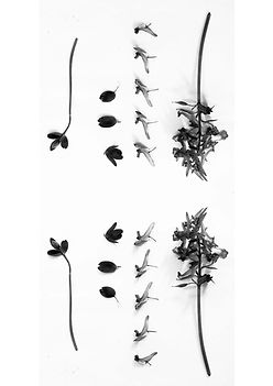 IndividualNature_PhotographicExperiment_BlackAndWhitePhotography_Nature_GraphicDesign_DemiHorsman