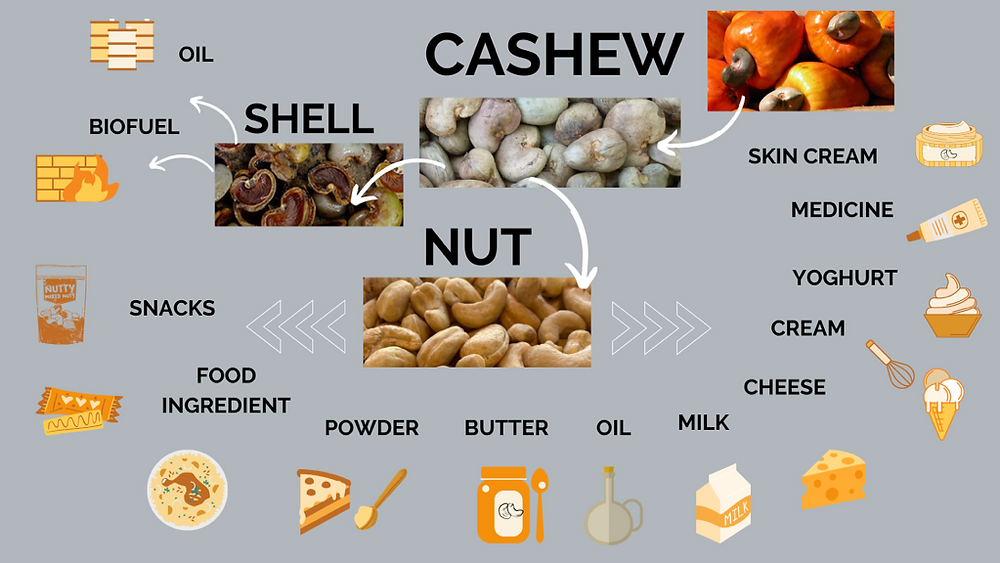 TOSK Global Ventures - Cashew nut and shell products and uses