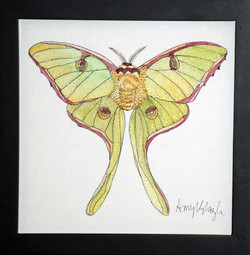 Yellow Lunar Moth