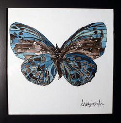 Blue Hairsteak Moth