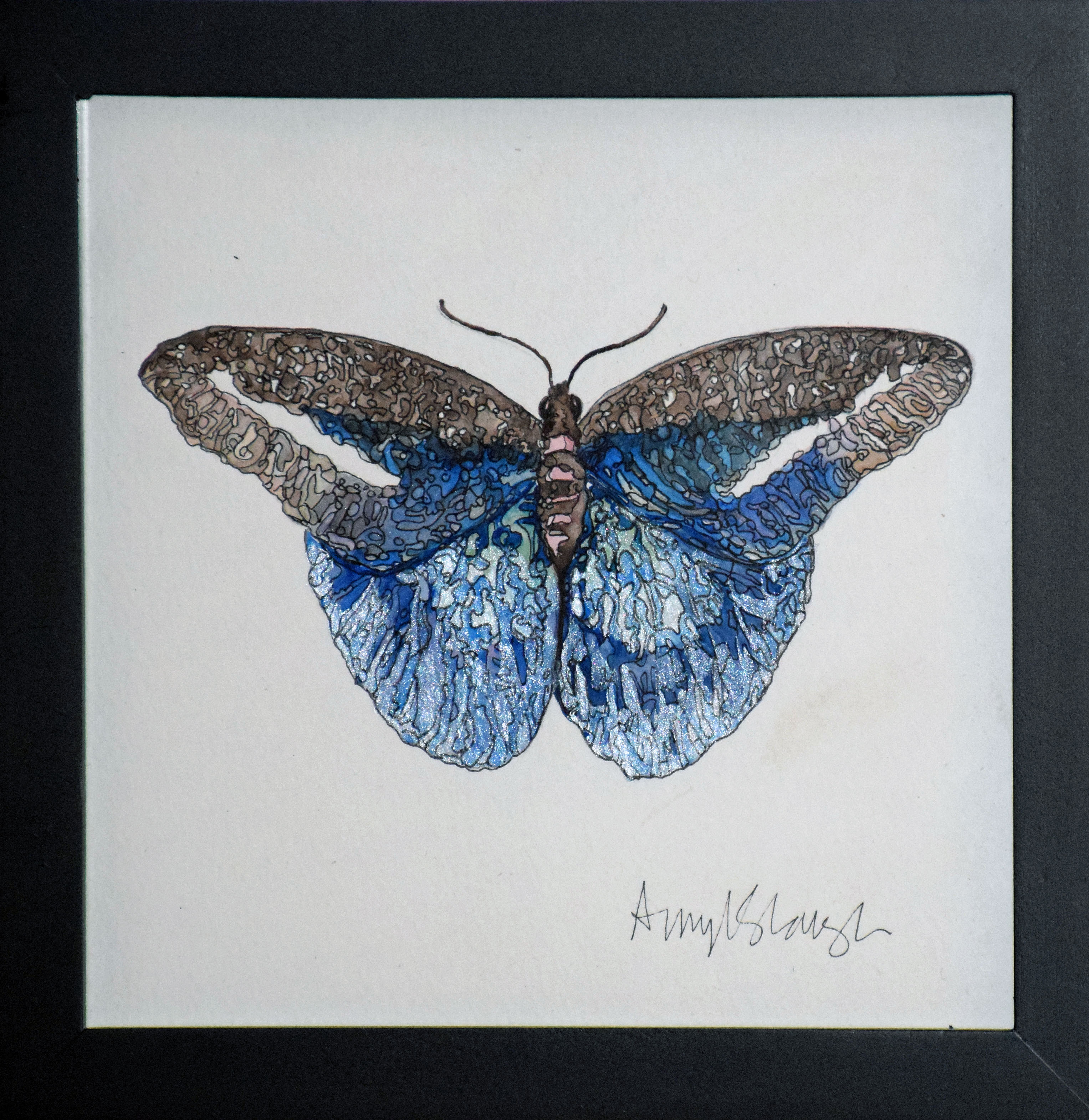 Amphinome Butterfly