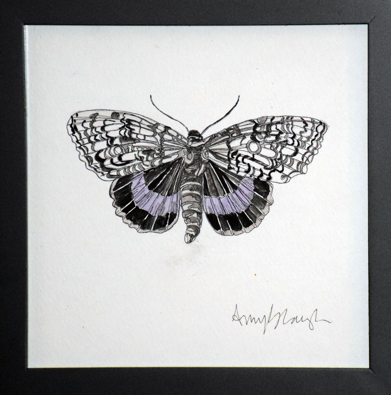Scoparia Moth