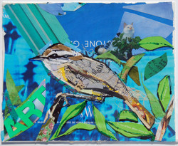 Carolina Wren Surprise Collage