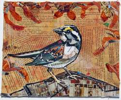 Sparrow Sparrow  Collage