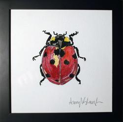 Ladybug Two