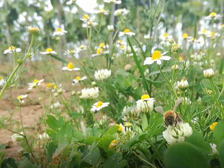 La fioritura della vite: come la vediamo noi