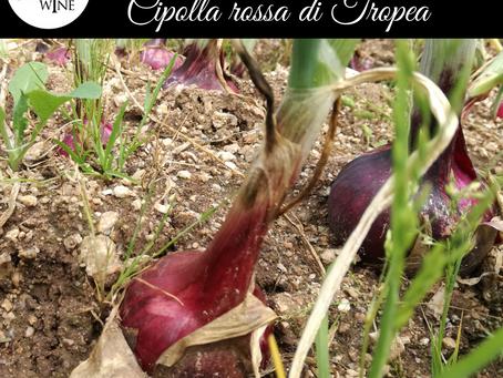 La dispensa di Furchì wine: la cipolla rossa di Tropea
