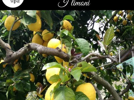 La dispensa di Furchì wine: i limoni di Calabria