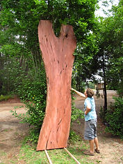 Red Gum Timber Slab