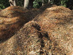 Mountains of Woodchip.