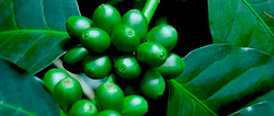 Soin Reviderm Chlorophylle