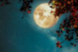 Beautiful autumn fantasy - maple tree in