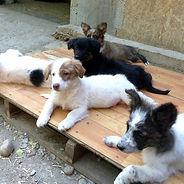 Parrainage chiens refuge